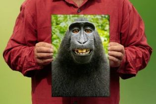 Британский фотограф получил авторское право на селфи макаки