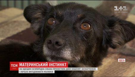 Чудеса природы: в Одесской области дворняга выкормила двух бездомных котят