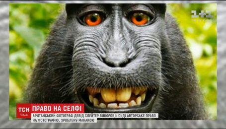 Британський фотограф два роки доводив, що має авторське право на зроблене мавпою фото