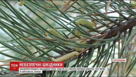 Экологическая катастрофа на Херсонщине. Леса объедают вредители