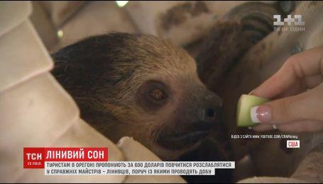 В Орегоне туристам предлагают за 600 долларов поучиться у ленивцев правильно расслабляться