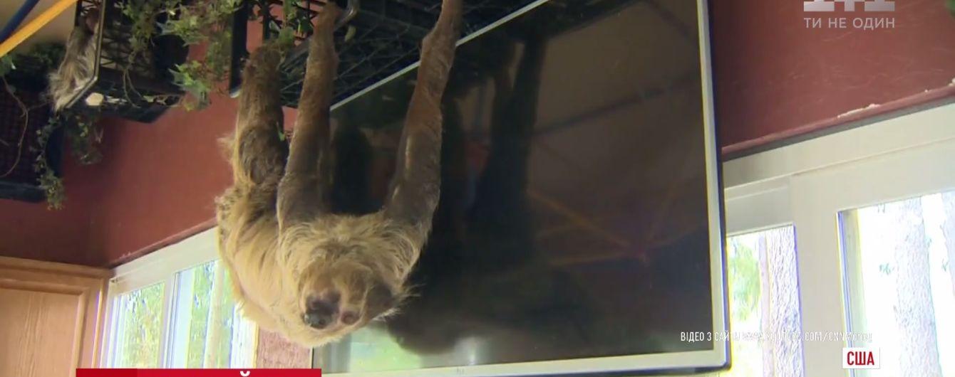 В Америке начали продавать отдых с ленивцами