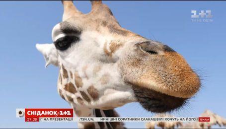 Мій путівник. Одеса - морозиво із пармезану і шампанського та фотосесія з жирафою