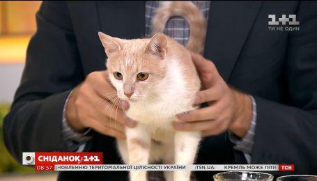 Кішка Масяня шукає родину