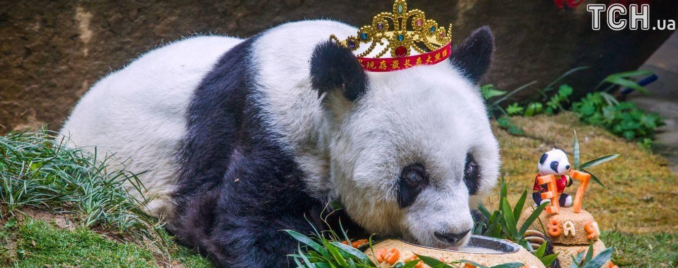 Умерла самая старая в мире панда
