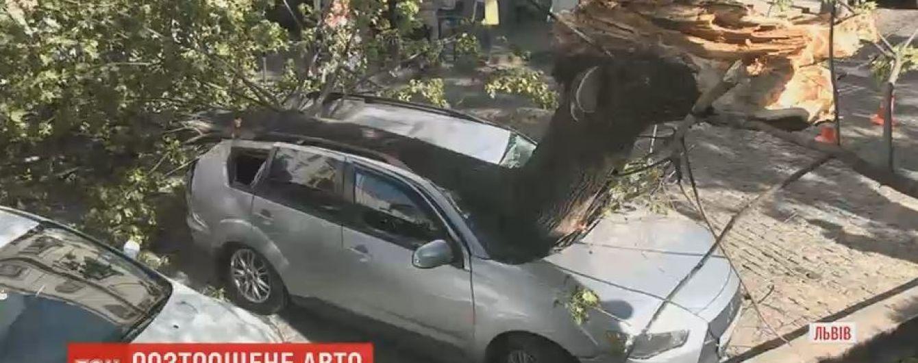 Во Львове дерево разбило автомобиль, припаркованный в центре города