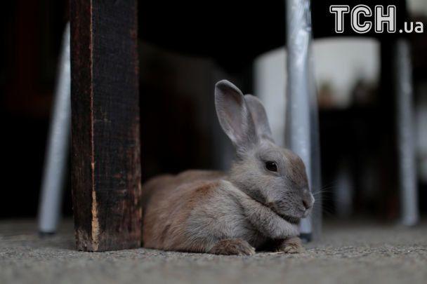 У Венесуелі влада порадила людям розводити кроликів на балконі та їсти їх