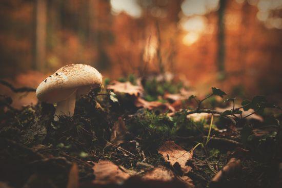 На Волині 13-річний хлопчик смертельно отруївся грибами