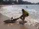 На австралийском пляже мужчина прямо за хвост пытался оттащить акулу обратно в океан