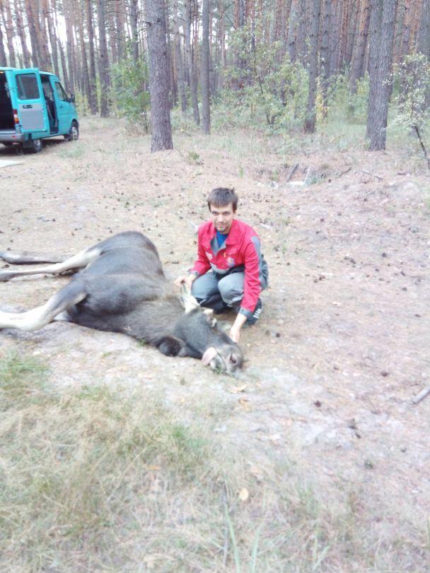 В Киеве спасли большого лося, который заблудился возле Московского моста