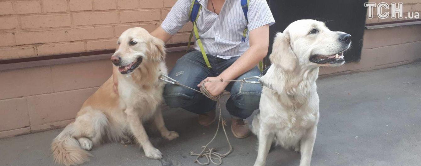 В Киеве из пожара в квартире спасли двух собак