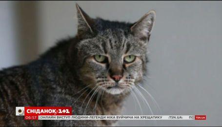 У Великій Британії помер найстаріший кіт у світі