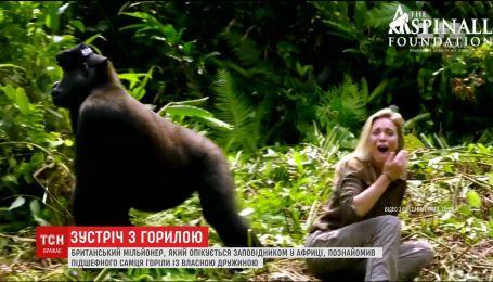 Трогательная встреча: британский миллионер устроил жене знакомство с гориллой