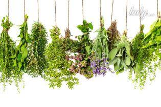 10 лучших способов сохранить пряные травы