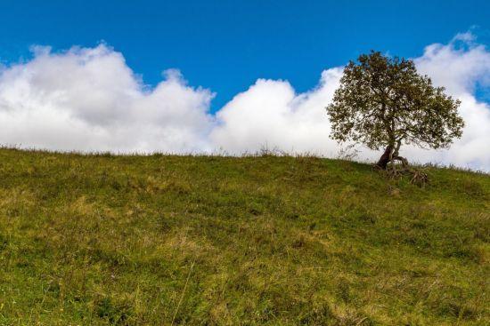 Новий тиждень розпочнеться з дощами на Заході та сухою погодою в решті регіонів
