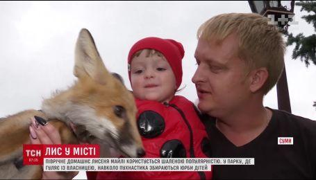 У Сумах приручене лисеня стало улюбленцем дітей