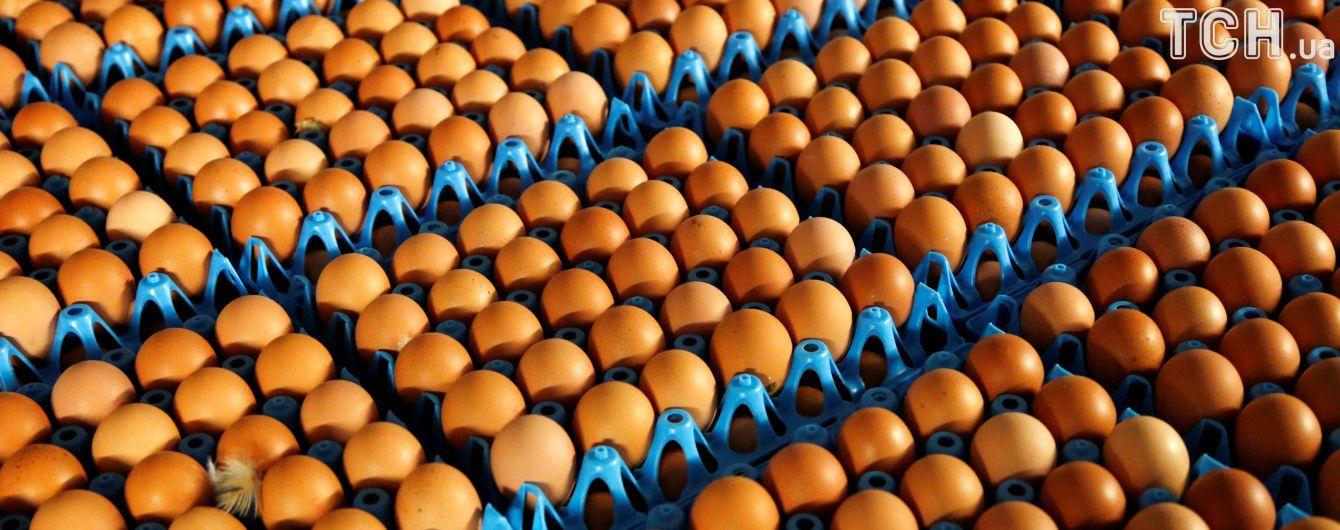 """""""Яичный скандал"""": в ЕС планируют улучшить систему уведомлений о загрязнении продуктов"""