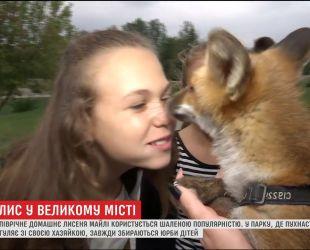 Маленький лис стал любимцем горожан в Сумах