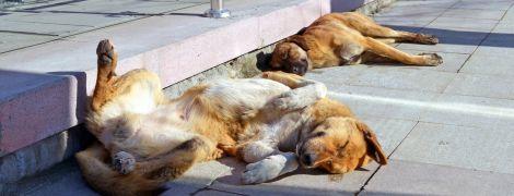 Волонтери заявили про збільшення кількості безпритульних собак у Києві