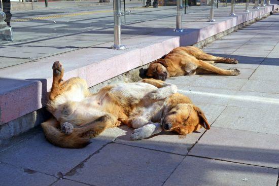 У Кропивницькому у дворах на кількох вулицях приватного сектору потруїли всіх собак