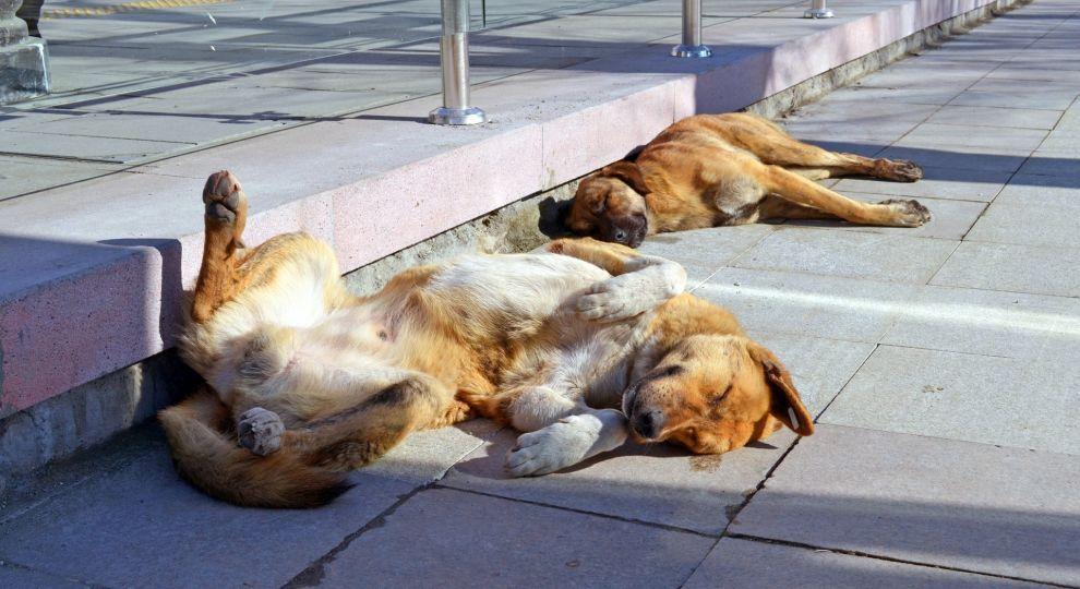 Волонтеры заявили об увеличении количества бездомных собак в Киеве