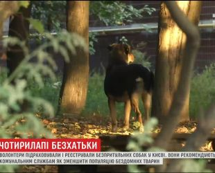 За три дня в Киеве волонтеры насчитали более трех тысяч бродячих собак