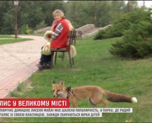 Звездой детского парка в Сумах стал маленький лисенок из Западной Украины