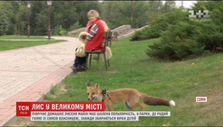 Зіркою дитячого парку у Сумах стало маленьке лисеня із Західної України