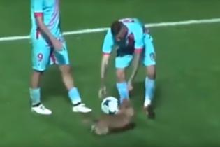 Собака посеред футбольного матчу показав вишуканий дриблінг та потім дав інтерв'ю