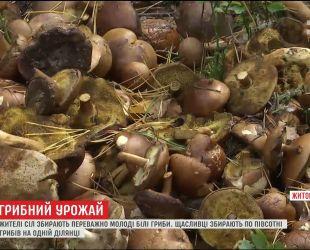 На Житомирщине люди собирают рекордные урожаи грибов
