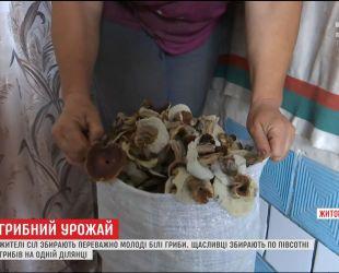 Урожайный сезон грибов в Житомирской области озадачил местных жителей