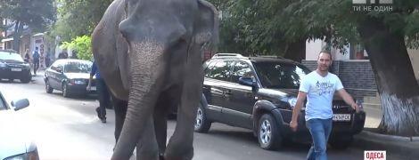 По улицам Одессы разгуливает слон