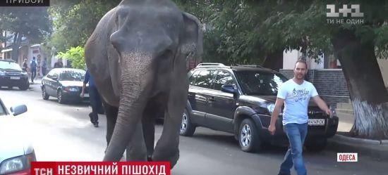 По вулицях Одеси розгулює слон