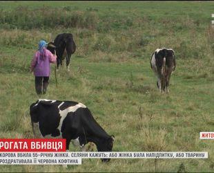 На Житомирщині корова забила рогами до смерті 55-річну жінку