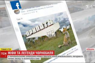 ТСН зібрала нові найстрашніші легенди та міфи про Чорнобиль