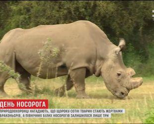 У світі відзначають Міжнародний день носорога