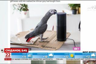 У Британії папуга зробив покупку в інтернет-магазині