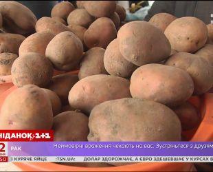 В Украине упали цены на картофель