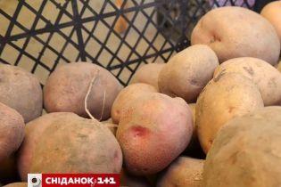 В Україні падають ціни на картоплю