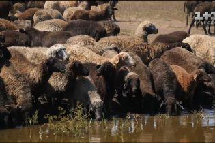Мій путівник. Одещина - бджолиний санаторій і найбільша в Європі отара овець