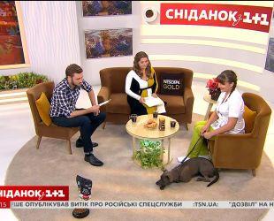 Здоровое питание собаки: рацион и запрещенные продукты