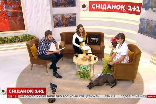 Здорове харчування собаки: раціон і заборонені продукти