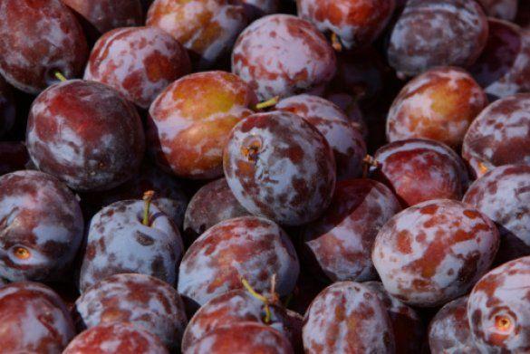 фрукты_4