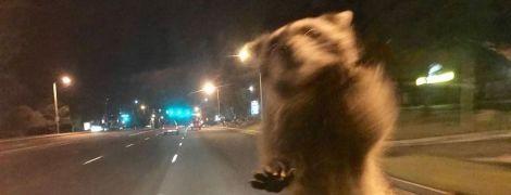 Єнот-нахаба атакував поліцейське авто у США