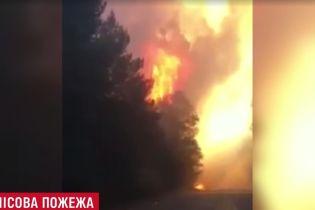 Полтавщина в огні: біля Кременчука запалав ліс