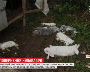 Возвращение чупакабры: на Прикарпатье неизвестный зверь снова поубивал кроликов