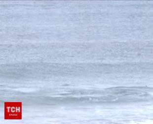 Два кита-убийцы вторглись на соревнования серфингистов