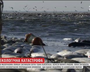 Сотні тон дохлої риби вкрили береги Молочного лиману на Запоріжжі
