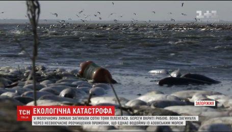 Сотни тонн дохлой рыбы покрыли берега Молочного лимана в Запорожье