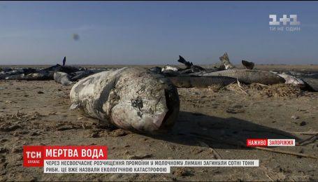 В Молочном лимане погибли сотни тонн пиленгаса